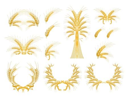 Set di elementi di design con grano Vettoriali