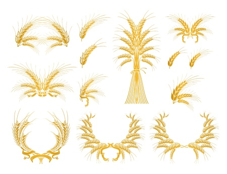 Set of Design Elements with Wheat Stock Vector - 13695624