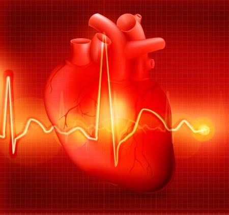Heart cardiogram Stock Vector - 13781031