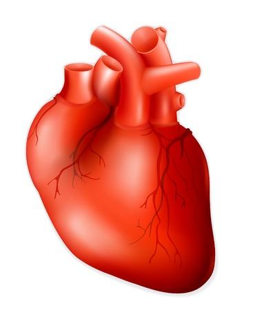 Ludzkie serce Ilustracje wektorowe