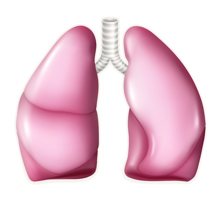 breathing: Human lungs Illustration