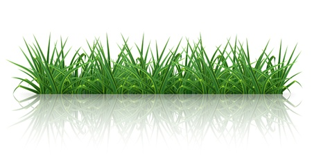 grass blades: Grass Illustration