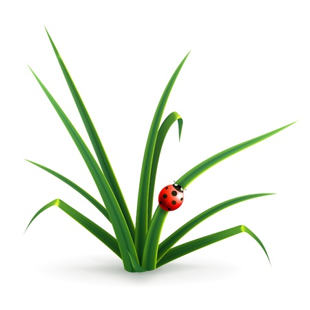 Ladybug and grass Vector