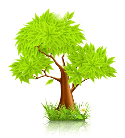 Green Tree Stock Vector - 13798105