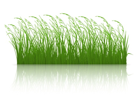 Green grass Stock Vector - 13798478