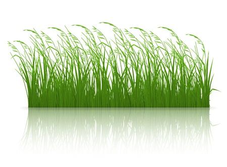 Green grass Stock Vector - 13798478