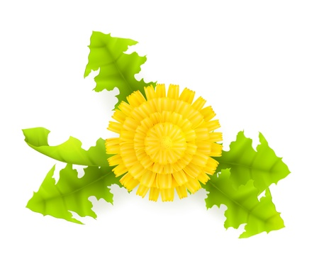 Yellow Dandelion Stock Vector - 13798417