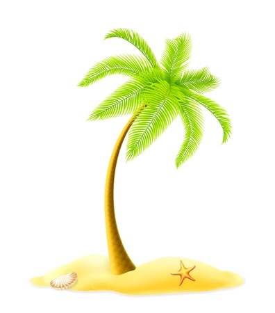 coconuts: Palm tree
