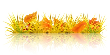 Autumn grass Vector