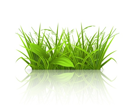 Green grass Stock Vector - 13876046