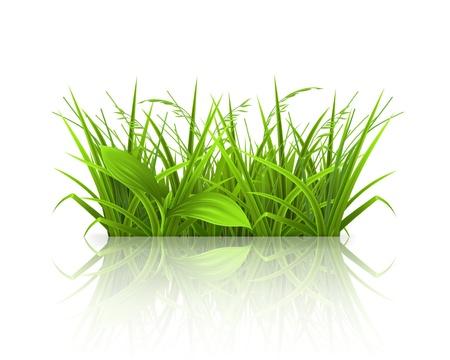 Green grass Stock Vector - 13876046