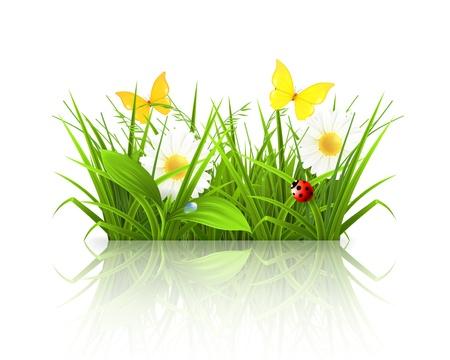 fleurs des champs: L'herbe de printemps Illustration