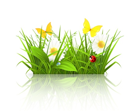 grass blades: Spring grass Illustration