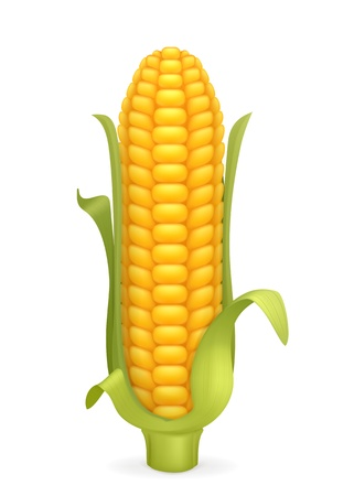 Corn Stock Vector - 13899311