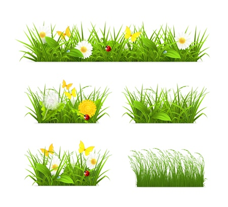 wildflowers: Grass set