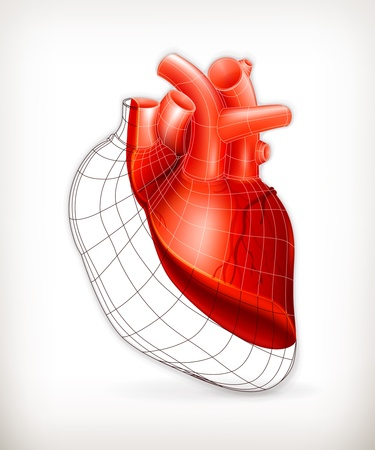heartbeat line: Heart structure Illustration