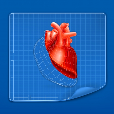 human vein heartbeat: Heart structure blueprint Illustration