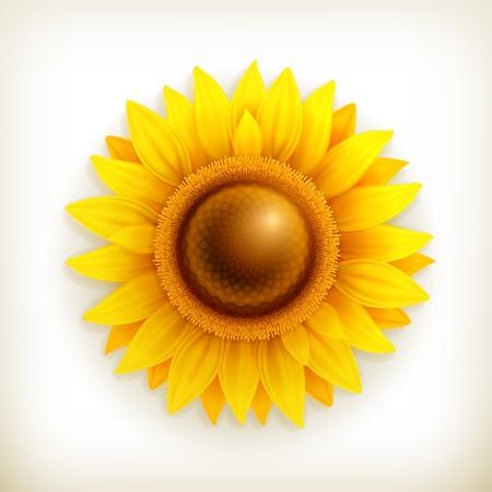 Sunflower Stock Vector - 14277431