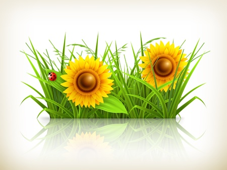 Sunflowers in grass Stock Vector - 14277442
