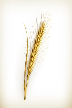 Ear of wheat Stock Vector - 14671508