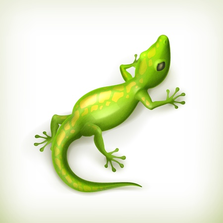 lizard: Reptile Illustration
