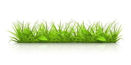 crecimiento planta: Hierba Vectores
