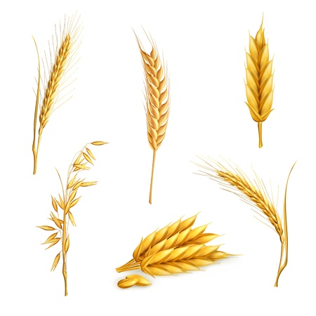 Wheat, set Vector