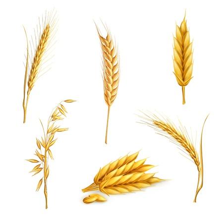 oats: Wheat, set