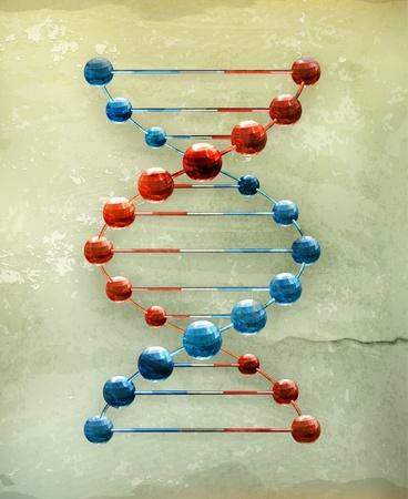 gene: Desoxyribonucleïnezuur, oude stijl