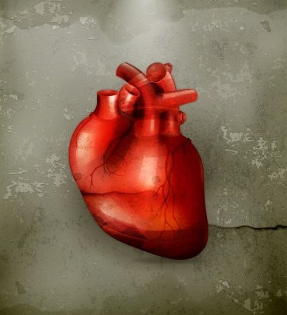 old people: Human heart, old-style