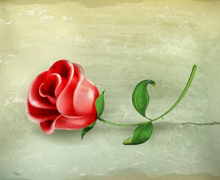 love rose: Rose, de estilo antiguo Vectores