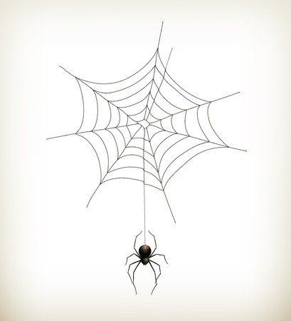 spider web icon: Spider and web