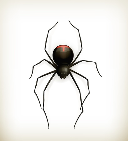 Spider, icon Stock Vector - 15538819