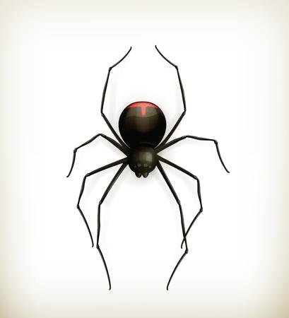spider web: Spider, icon Illustration