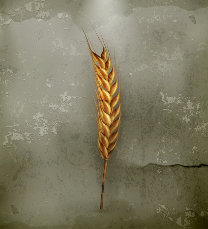 Ear of wheat, old-style Vector