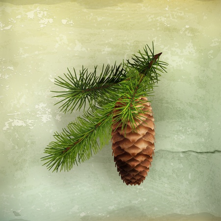 pomme de pin: Pomme de pin avec la branche, à l'ancienne Illustration