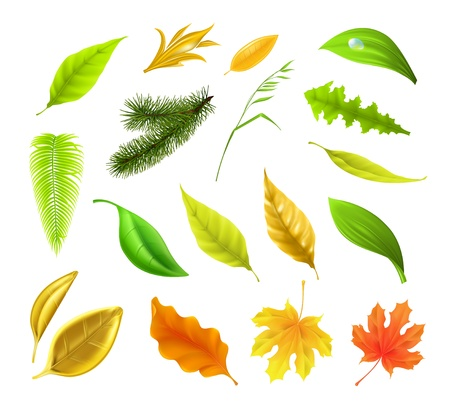 Leaf collection Stock Vector - 17133253