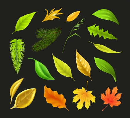 Leaf collection Stock Vector - 17885415