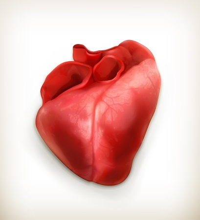 Human heart Stock Vector - 18825044