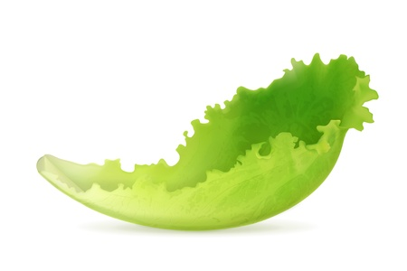 Lettuce Stock Vector - 18825022