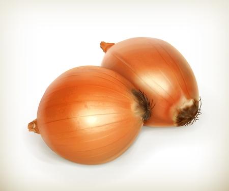 Onion Stock Vector - 18825043