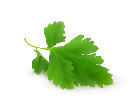 Parsley Stock Vector - 18825034