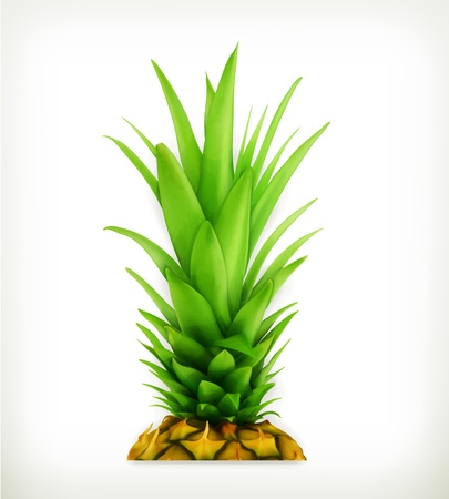 ananas: Pineapple top Illustration