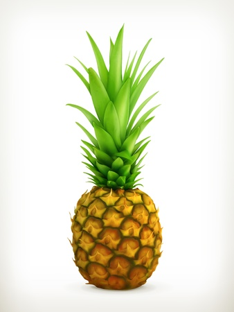 Pineapple Stock Vector - 19437891