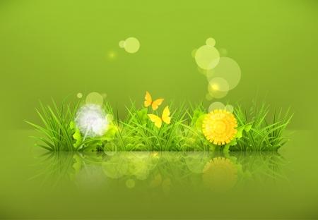 sedge: Dandelions and grass