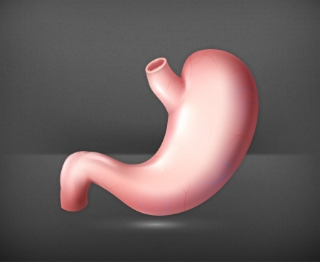 Human stomach Stock Vector - 19474339
