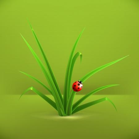 wild web: Ladybug and grass