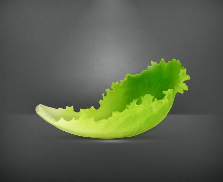 Lettuce Stock Vector - 19474398