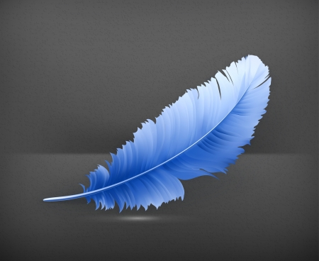 plumage: Feather
