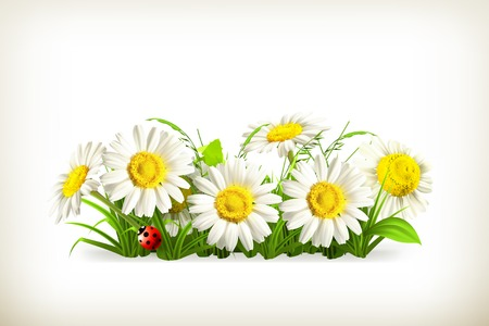 white daisy: Daisies in grass Illustration